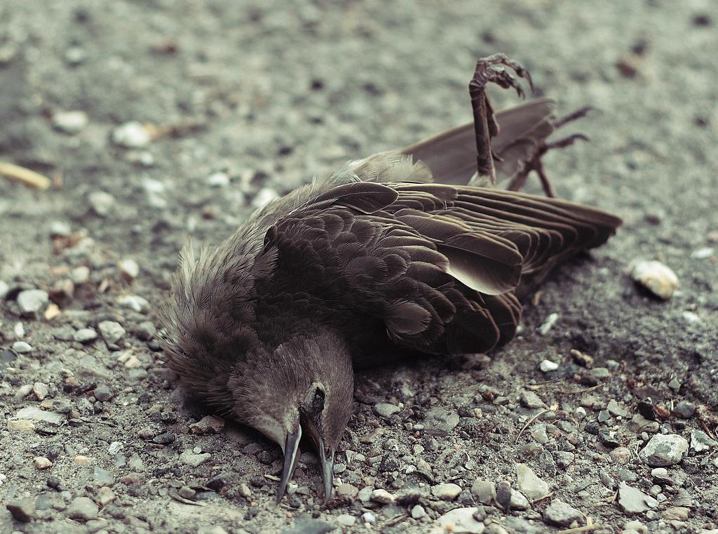 Rigor mortis