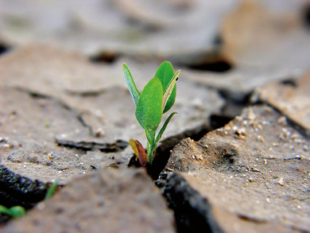 Entwicklung stresstoleranter Pflanzenkulturen