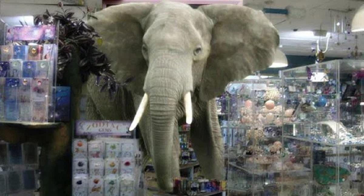 L'elefante in cristalleria