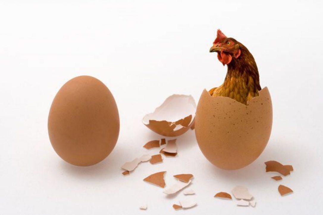 L'uovo o la gallina?