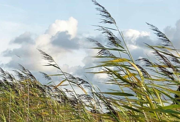 Il vento fa il suo giro e prima o poi ritorna